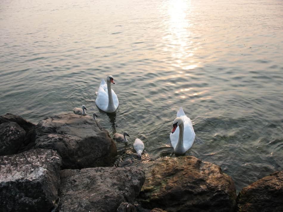 אגם גרדה איטליה